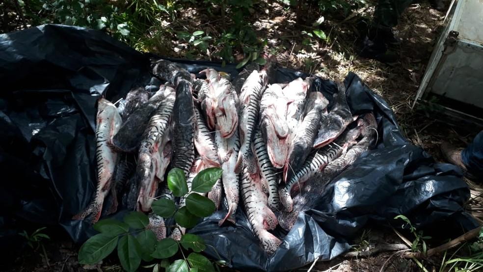 Peixes foram recolhidos e doados para entidades filantrópicas — Foto: Polícia Militar/Divulgação