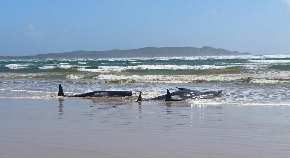 Baleias encalhadas na Tasmânia, ilha ao sul da Austrália — Foto: Polícia da Tasmânia/AFP