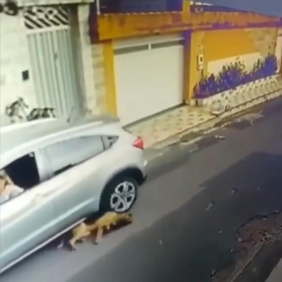 Carro atropela dois cachorros em São Luís; Vídeo repercute nas redes sociais (Foto: Reprodução/Instagram )