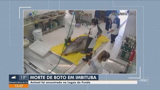 Boto é encontrado morto na Lagoa do Fundo, em Imbituba