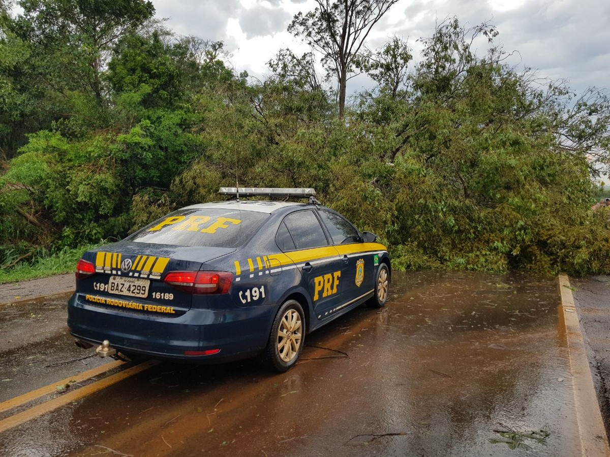 Árvores derrubadas por ventos fortes bloqueiam trechos da BR-369 em Ubiratã