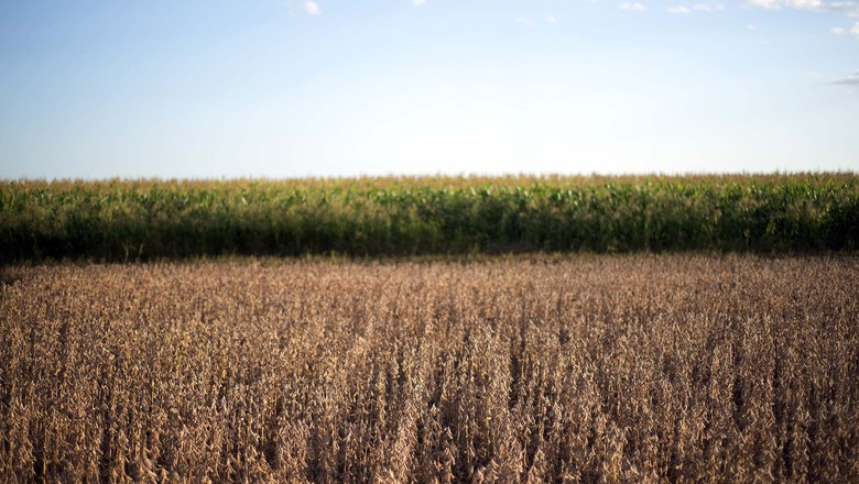 agricultura-lavoura-soja (Foto: Emiliano Capozoli/Ed. Globo)