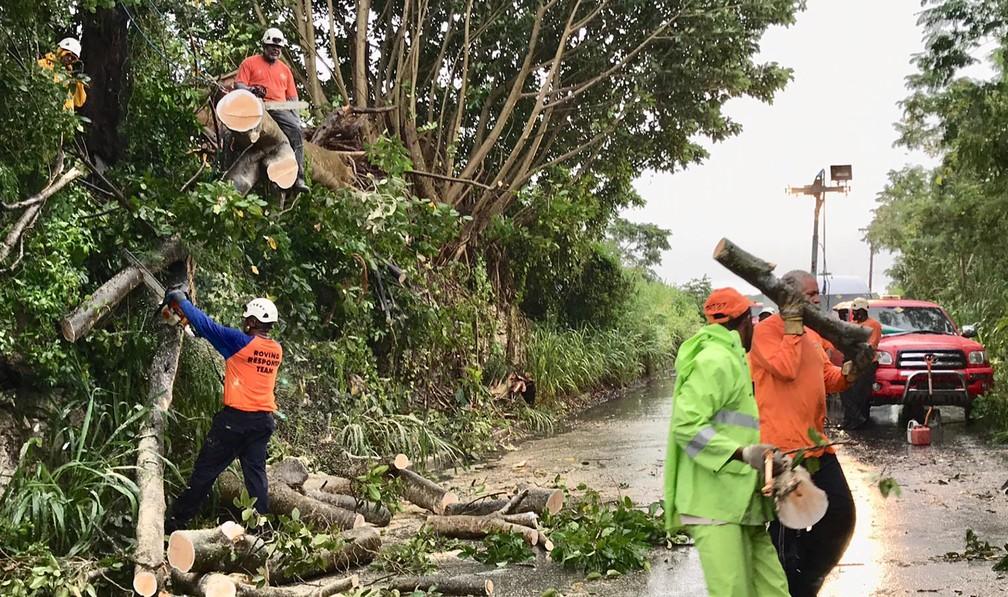 Trabalhadores voluntários removem árvore caída em Brighton St. George, Barbados, depois que a tempestade tropical Dorian atingiu a ilha na terça-feira (27). — Foto: Nigel R Brown/Reuters