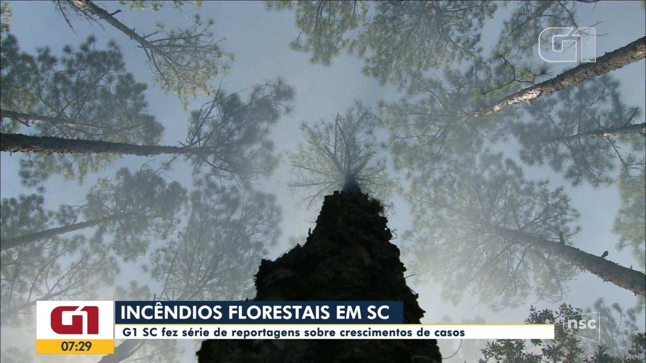 G1 produz série de reportagens sobre incêndios florestais em SC