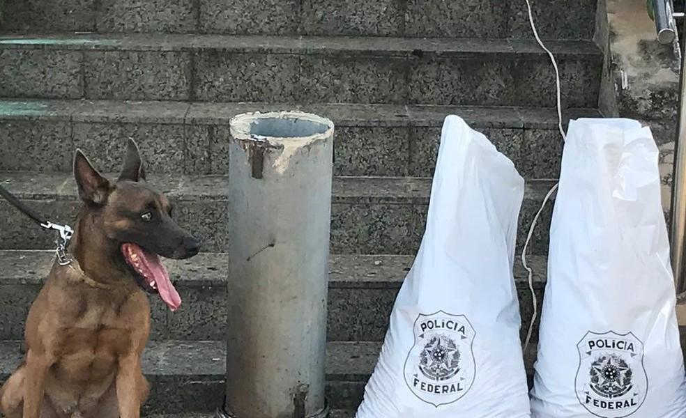 Cão farejador achou droga escondida em caminhão — Foto: Divulgação/Polícia Federal no Acre