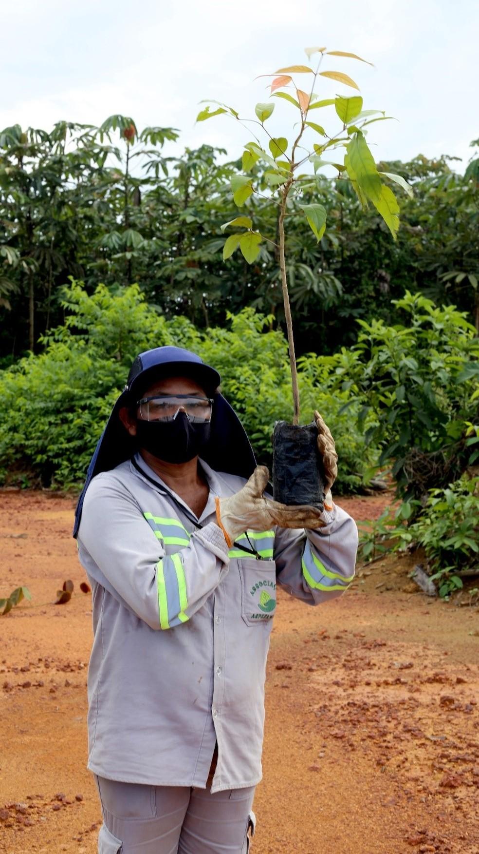 : Milhares de mudas de árvores passaram pelas mãos da auxiliar de campo Cleide Xavier.— Foto: Alcoa