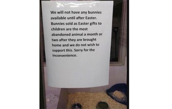 Na loja, o cartaz que vai salvar alguns coelhos nesta Páscoa (Foto: Reprodução)