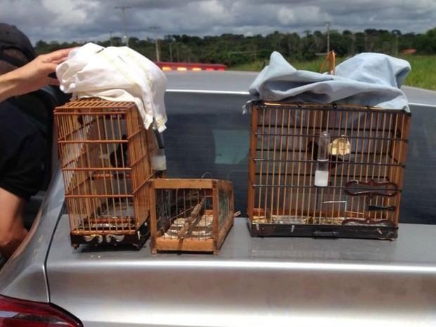 Polícia apreendeu pássaros em extinção dentro do carro do suspeito (Foto: Divulgação/Polícia Civil de Mato Grosso)
