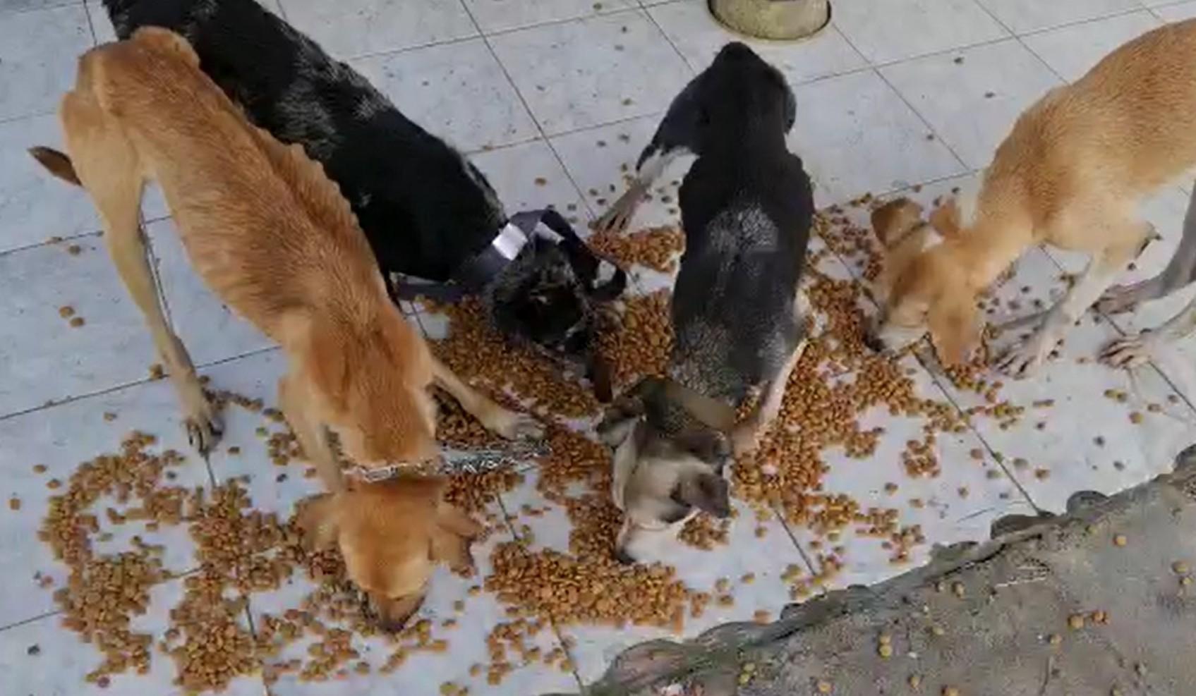Abandonados pelo tutor, 5 cães foram encontrados em situação de maus-tratos no interior do AP