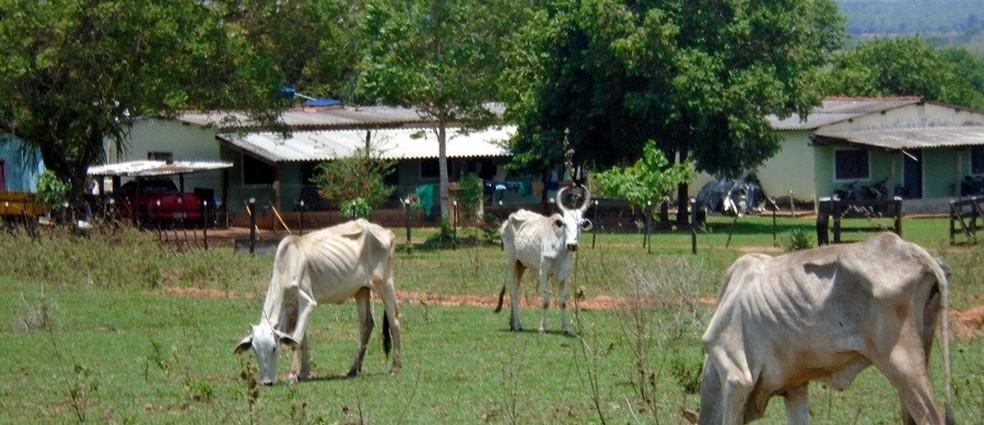 Animais estavam todos desnutridos e em meio a pastagem degradada, segundo a PMA — Foto: PMA/Divulgação