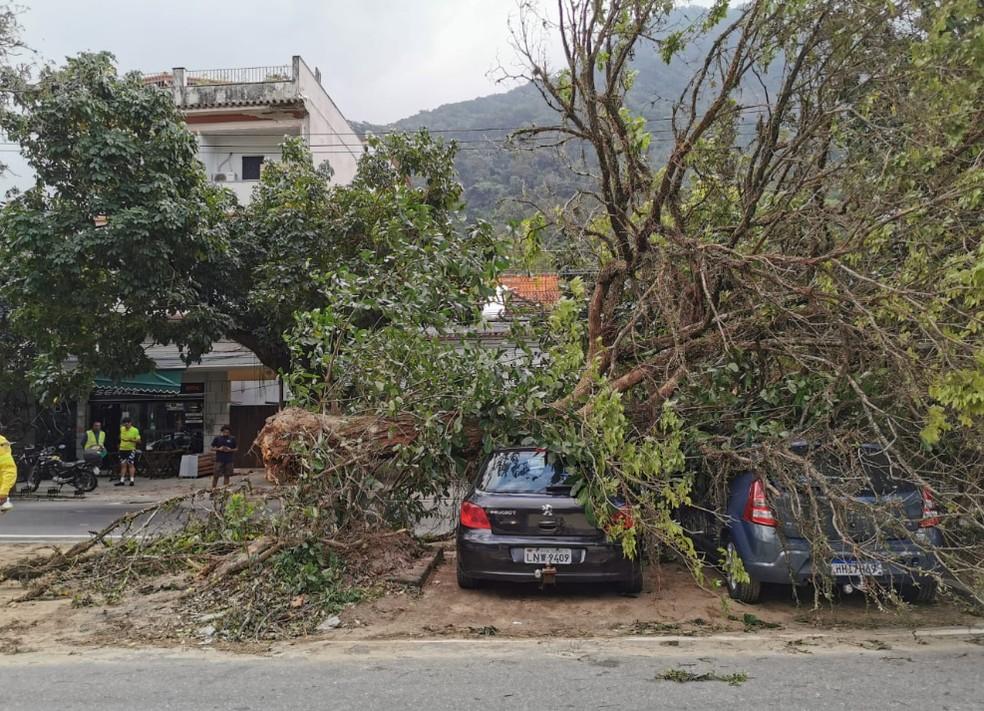 Árvore cai em carro no Horto, Zona Sul do Rio. — Foto: Marcos Serra Lima/G1