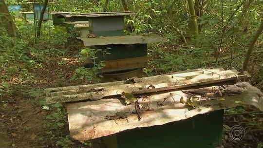 Ladrões furtam mel de apiários na região noroeste paulista
