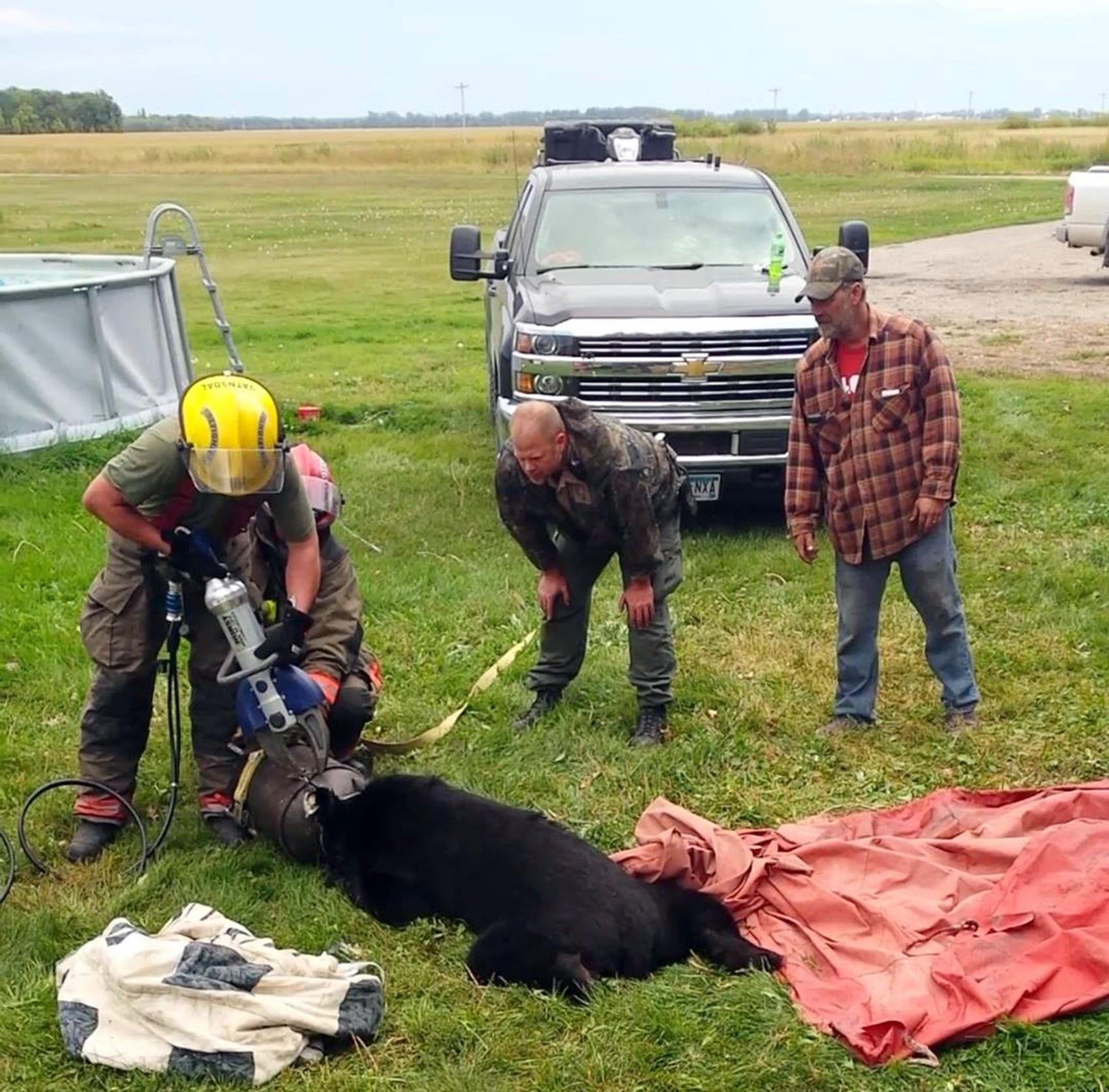 Urso fica com cabeça presa em galão de leite nos EUA