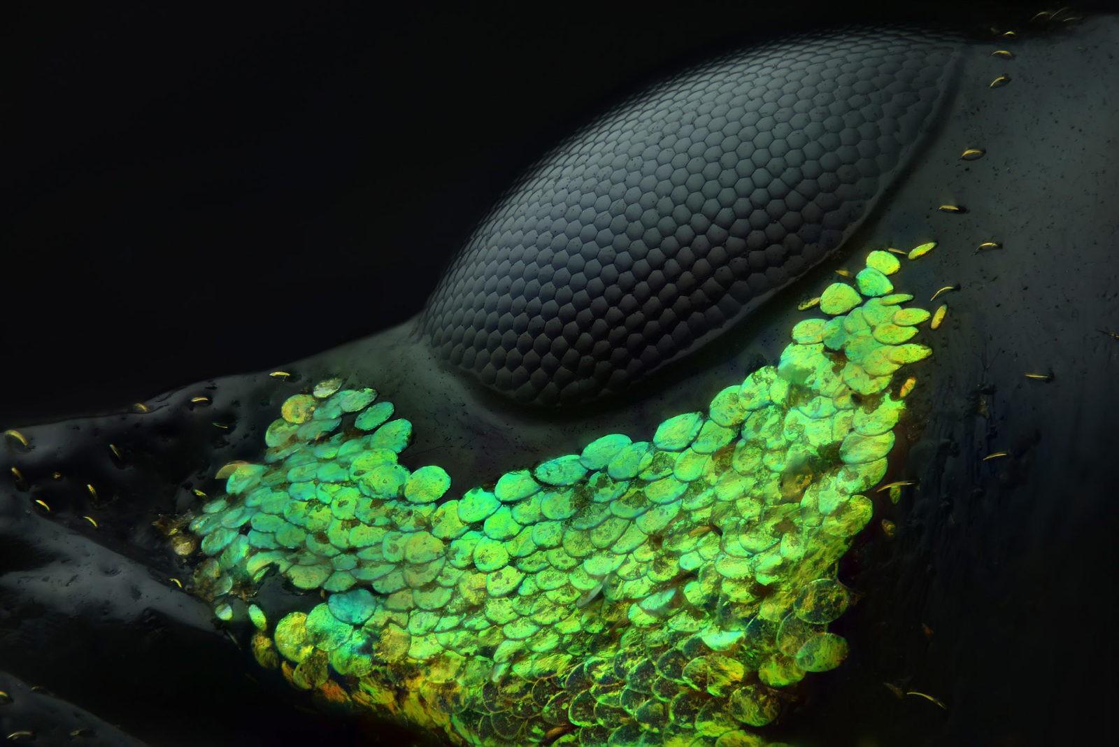 O clique vencedor do concurso da Nikon mostra os detalhes de um besouro (Foto: Yousef Al Habshi)