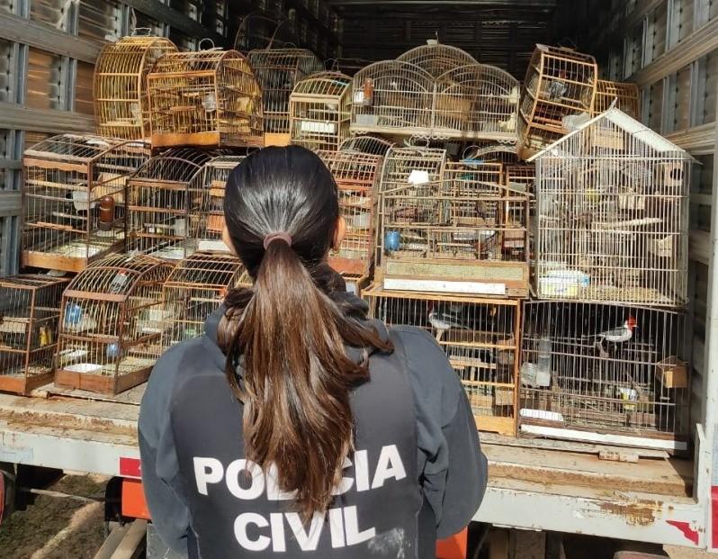 Polícia apreende mais de 200 aves silvestres dentro de residência em Porto Alegre