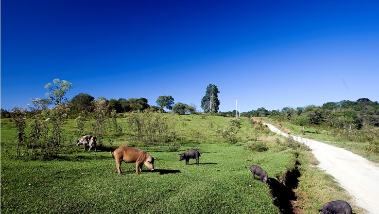 agricultura_familiar_criacao_suinos (Foto: Leandro Taques/Ed. Globo)