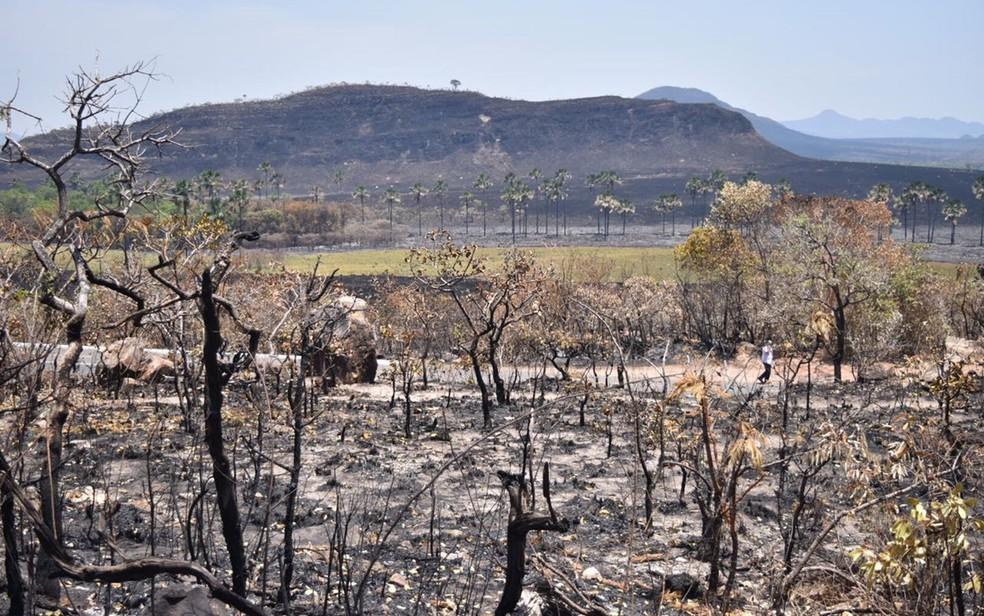 Mais de 65 mil hectares da vegetação da Chapada dos Veadeiros já foram destruídos pelo fogo (Foto: Vitor Santana/G1)