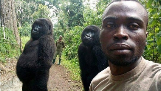 Foto: (Facebook/Virunga National Park)