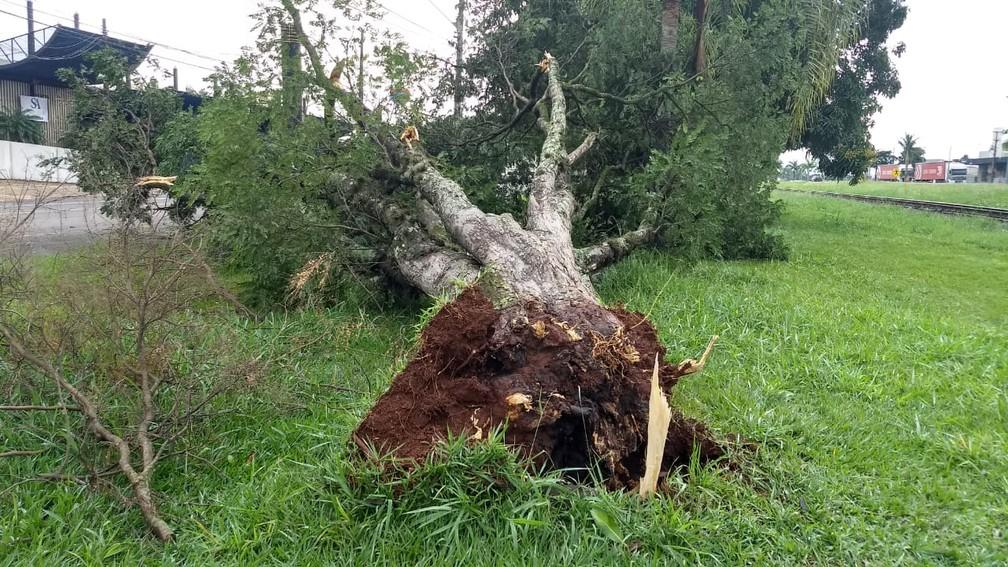 Temporal derrubou árvores e também destelhou casas na cidade  — Foto: Victor Hugo Bittencourt/RPC