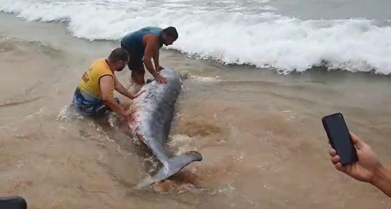 Filhote de baleia encalha em praia de Cabo Frio, RJ, e é ajudado por banhistas a voltar para o mar