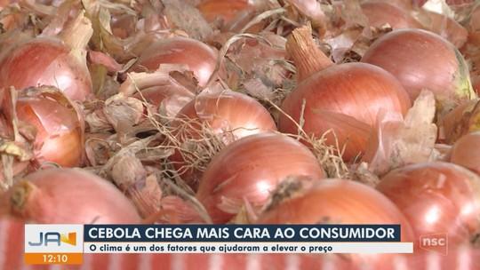 Clima e pragas prejudicam safra da cebola e alimento chega mais caro ao consumidor