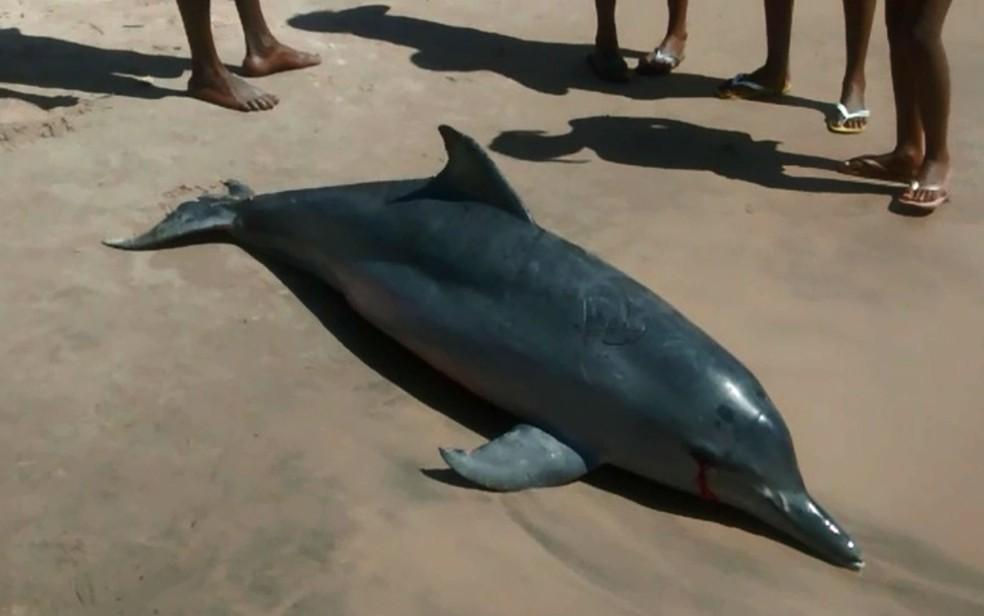 Golfinho fêmea foi encontrado morto em uma praia de Itacaré (Foto: André In9 Pró/Arquivo pessoal)