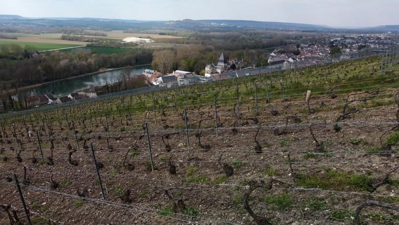 Vinícola em Champagne, na França 14/04/2021 (Foto: REUTERS/Pascal Rossignol)