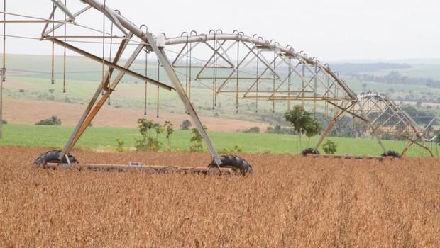 Plantação de soja em Goiás  (Foto: Tony Oliveira/CNA/Direitos Reservados, via Agência Brasil)