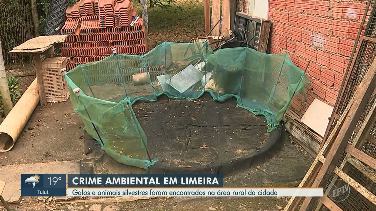 Polícia Militar encontra galos e animais silvestres em área rural de Limeira