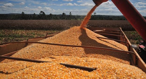 Brasil deve produzir 113,5 milhões de toneladas de milho na safra 2020/2021