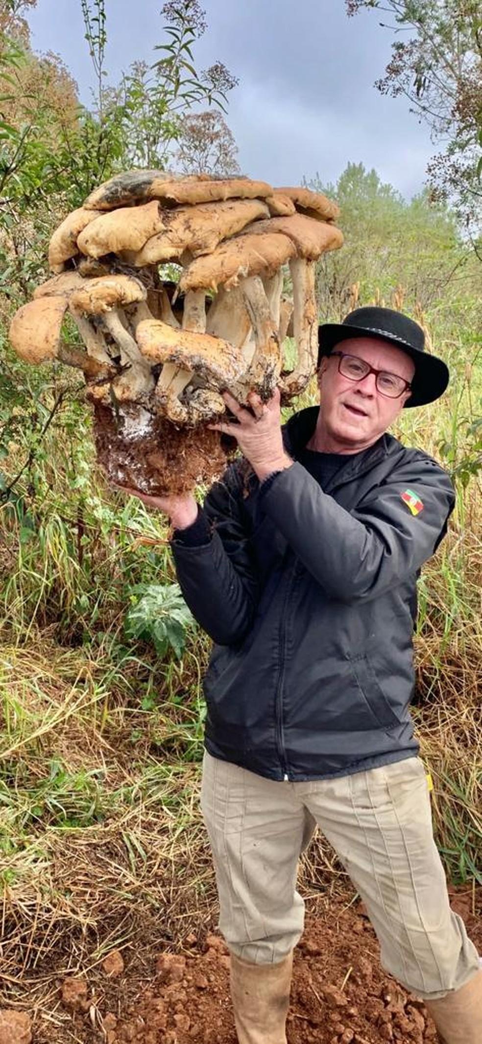 Dono da chácara segura cogumelo gigante — Foto: Evandro Nicola/Arquivo Pessoal