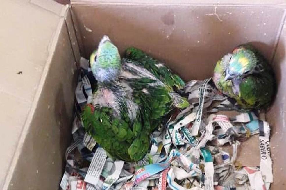 De acordo com a polícia, alguns animais estavam acondicionados em situações precárias e sofriam maus tratos. — Foto: Polícia Civil/Divulgação