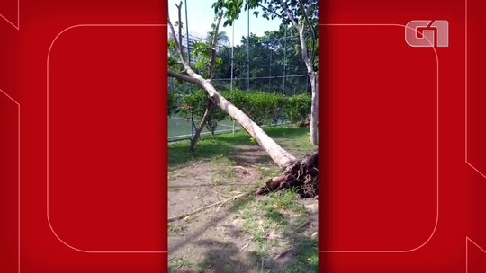 Vídeo mostra árvore caída em condomínio na Zona Oeste do Rio