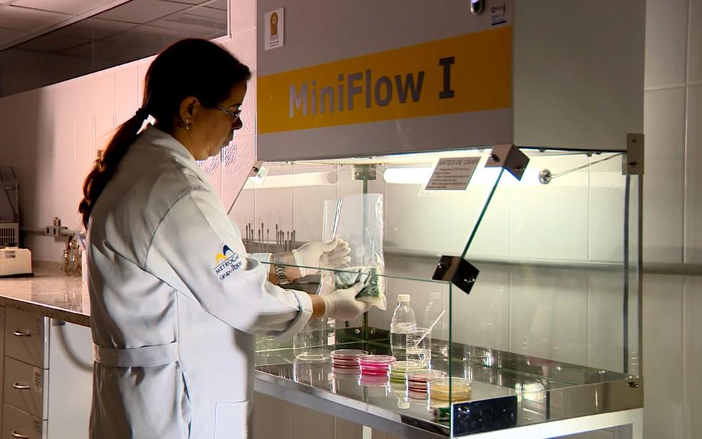 Pesquisadora de Campinas analisa esponja usada para lavar louça — Foto: Reprodução / TV Globo