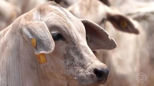 Foto: (Reprodução/Globo Rural)