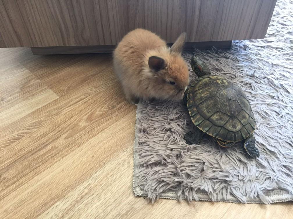 Cookie e Hulk são 'irmãs' (Foto: Arquivo pessoal)