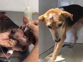 Cadela atacada com marreta toma o 1º  banho para tirar tinta (Divulgação)