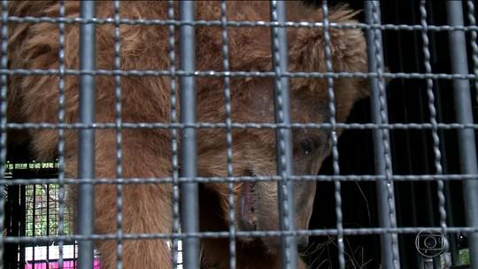 Ursa que vivia em zoológico de Teresina vai para santuário ecológico em SP