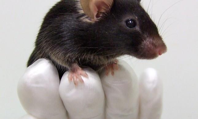 Pesquisas com ratos em laboratório apareceu em questão no Enem