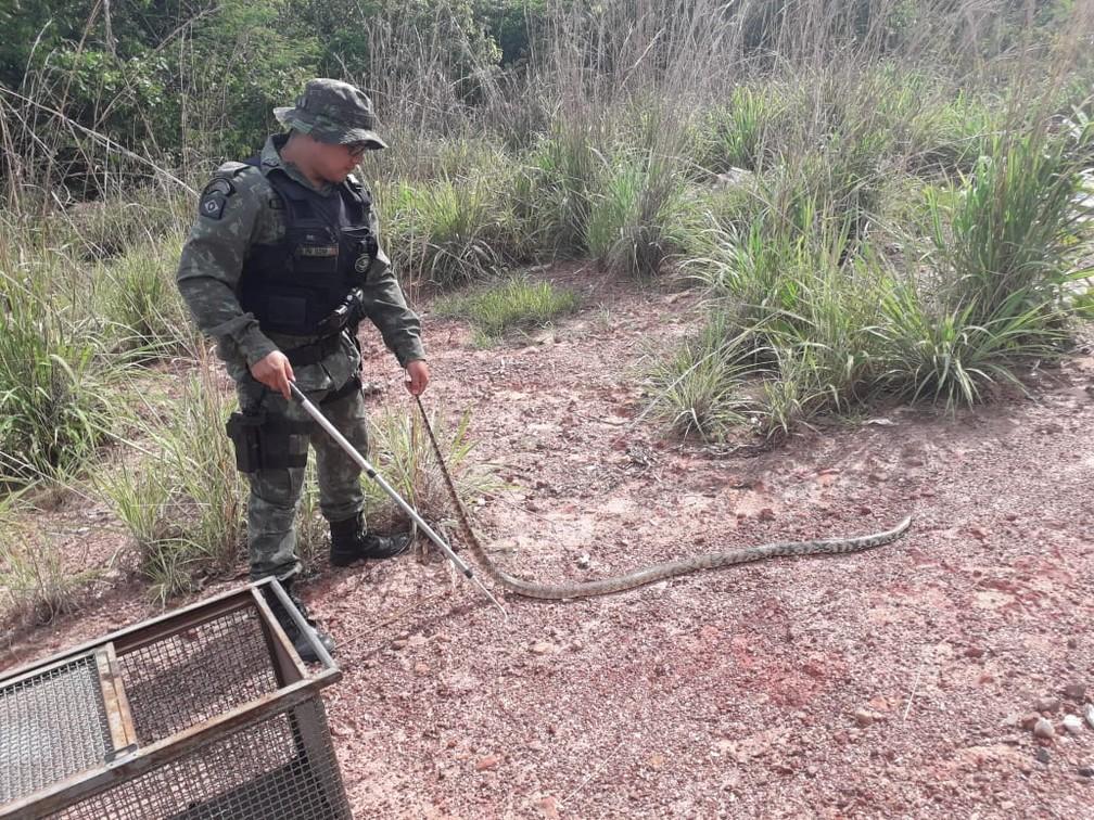 Cobra foi solta em área de mata — Foto: Polícia Ambiental-MT/ Divulgação