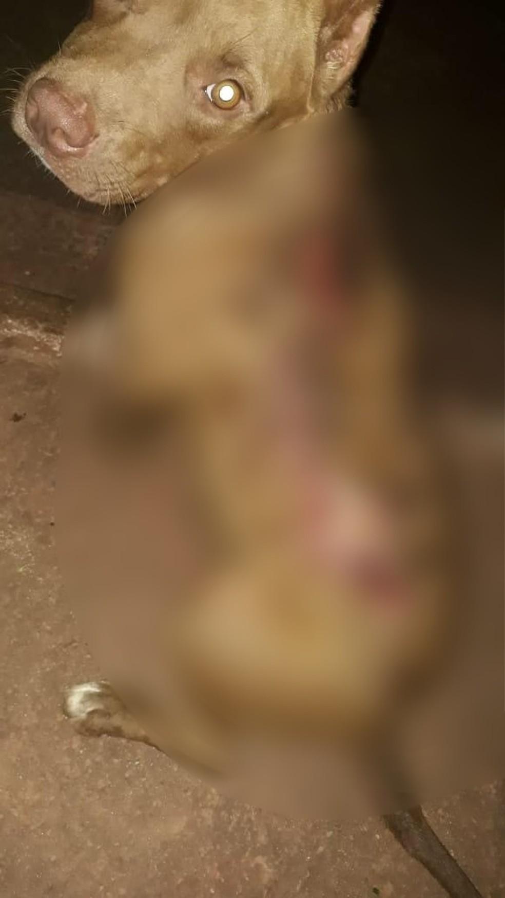 Cão foi esfaqueado pelo dono, que foi preso — Foto: PM-MT/ Divulgação