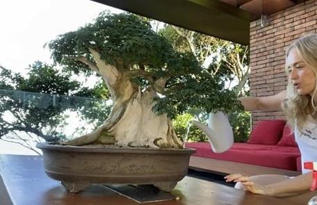 Angélica mostra, com exclusividade para a coluna, o cuidado com as plantas em sua casa no Rio durante a quarentena Arquivo pessoal