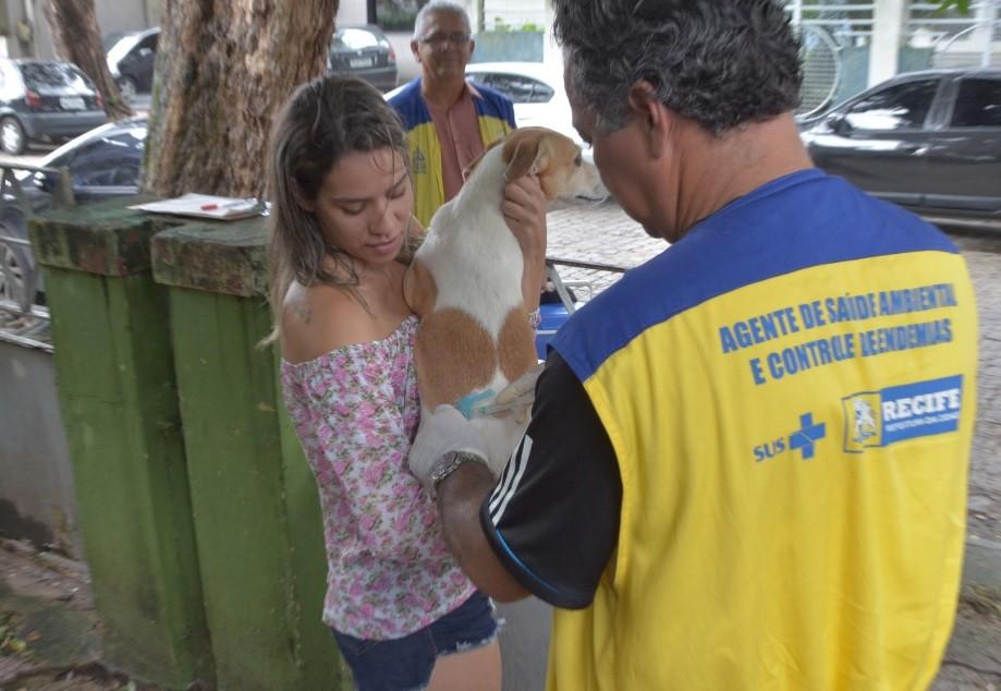 Recife realiza ação gratuita para vacinar cães e gatos contra raiva animal e abre 16 pontos