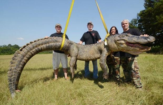 Grupo de caçadores capturou um aligátorde 336,3 quilos e estabeleceu um novo recorde no estado do Mississippi (Foto: Brian Albert Broom/The Clarion-Ledger/AP)