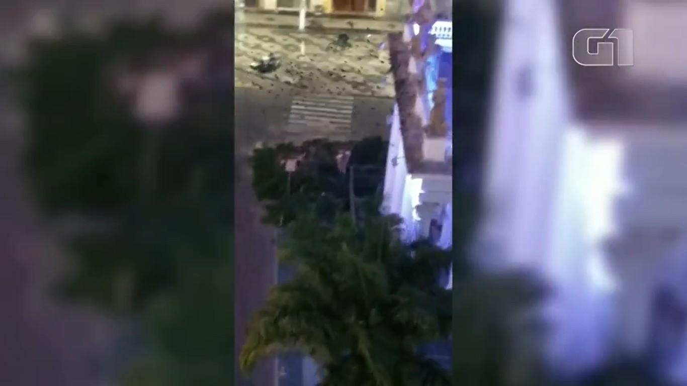 Vídeos mostram pássaros 'perdidos' após árvore ser cortada em praça de Campos, no RJ