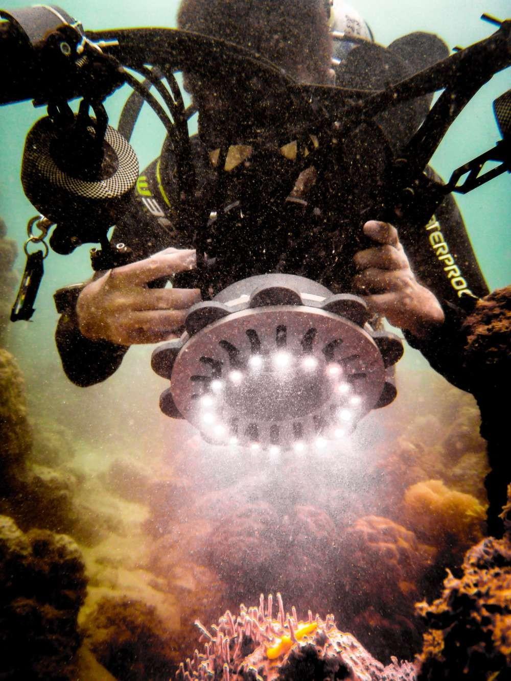 O cientista Cedric van den Berg usa uma câmera com a ferramenta QCPA para tirar fotos calibradas de um molusco nudibrânquico em Lizard Island, na Grande Barreira de Corais, Austrália (Foto: Emily Guevara and Cedric van den Berg)