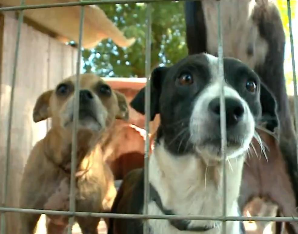 Animais resgatados que vivem em abrigo no interior do Rio Grande do Sul (Foto: Reprodução/RBS TV)