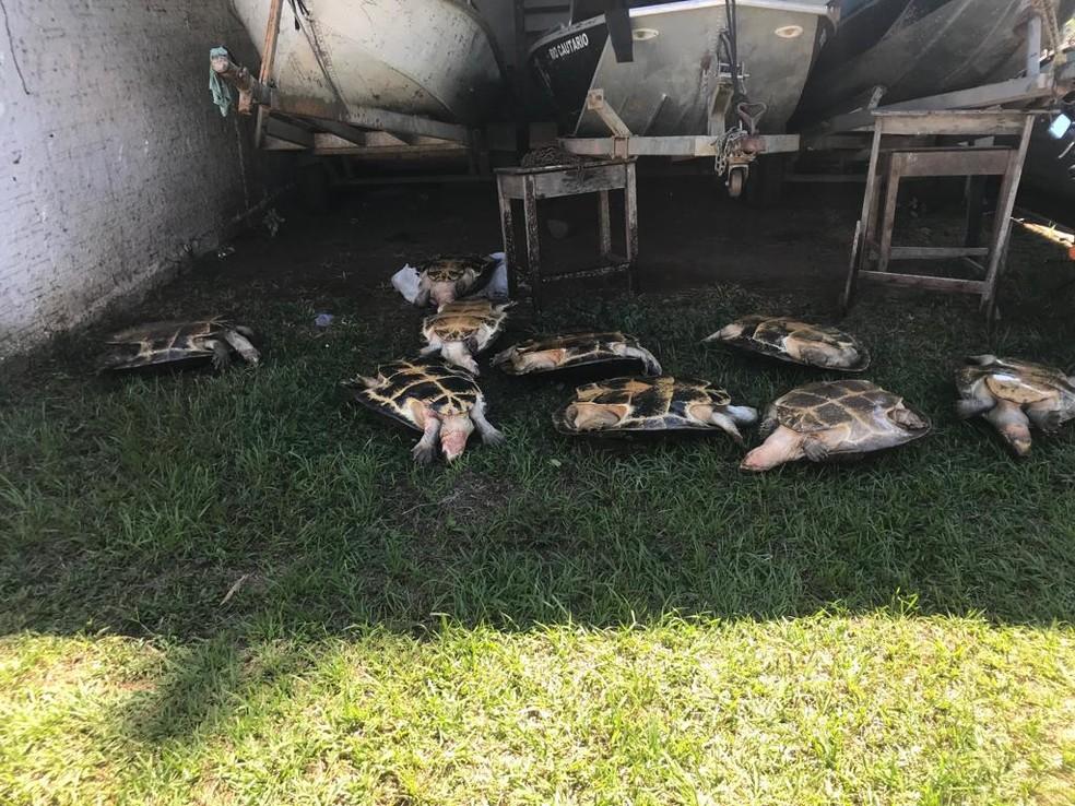 Ao todo, nove tartarugas foram resgatadas pela polícia — Foto: Polícia Civil/Divulgação