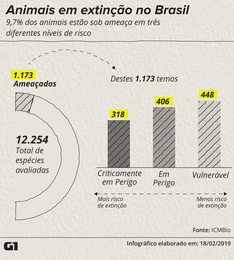 Animais em extinção no Brasil — Foto: Roberta Jaworski/G1