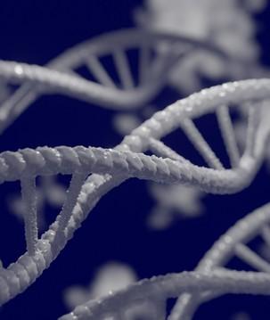 7 termos sobre genética para entender já